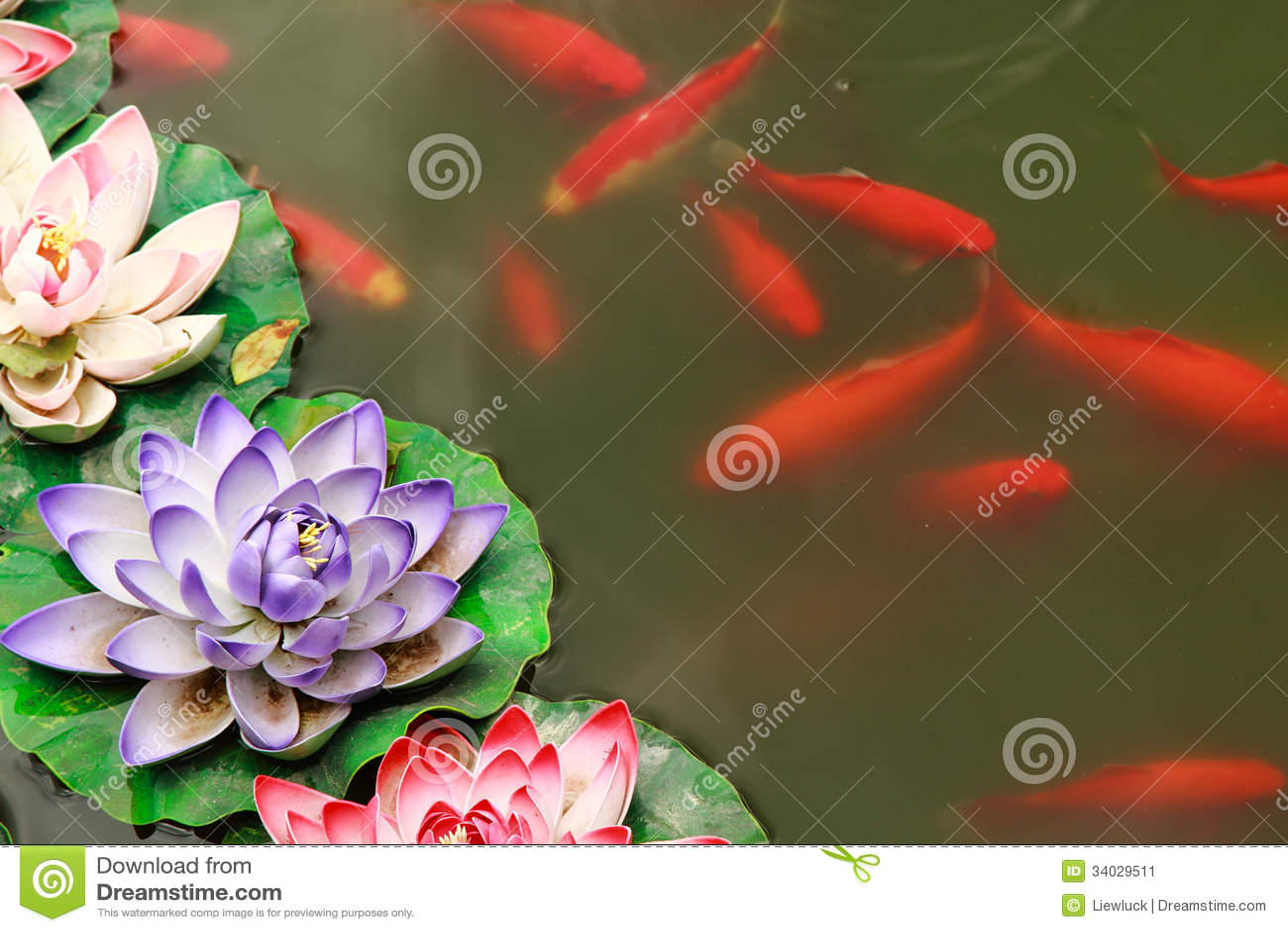 Koi in pond stock image image 34029511 for Koi fish pond lotus