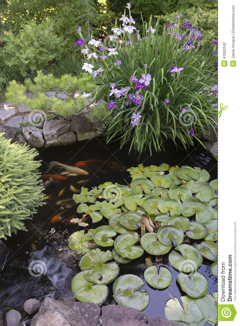 Koi pond with irises stock photo image of lilies for Small japanese ponds
