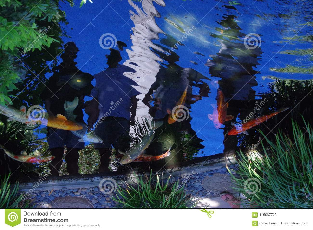 Koi pond with reflections of people