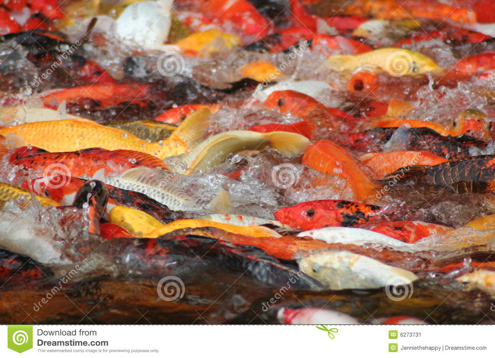 Koi spritzen sie stockbild bild von japan ffnung for Koi und goldfische zusammen