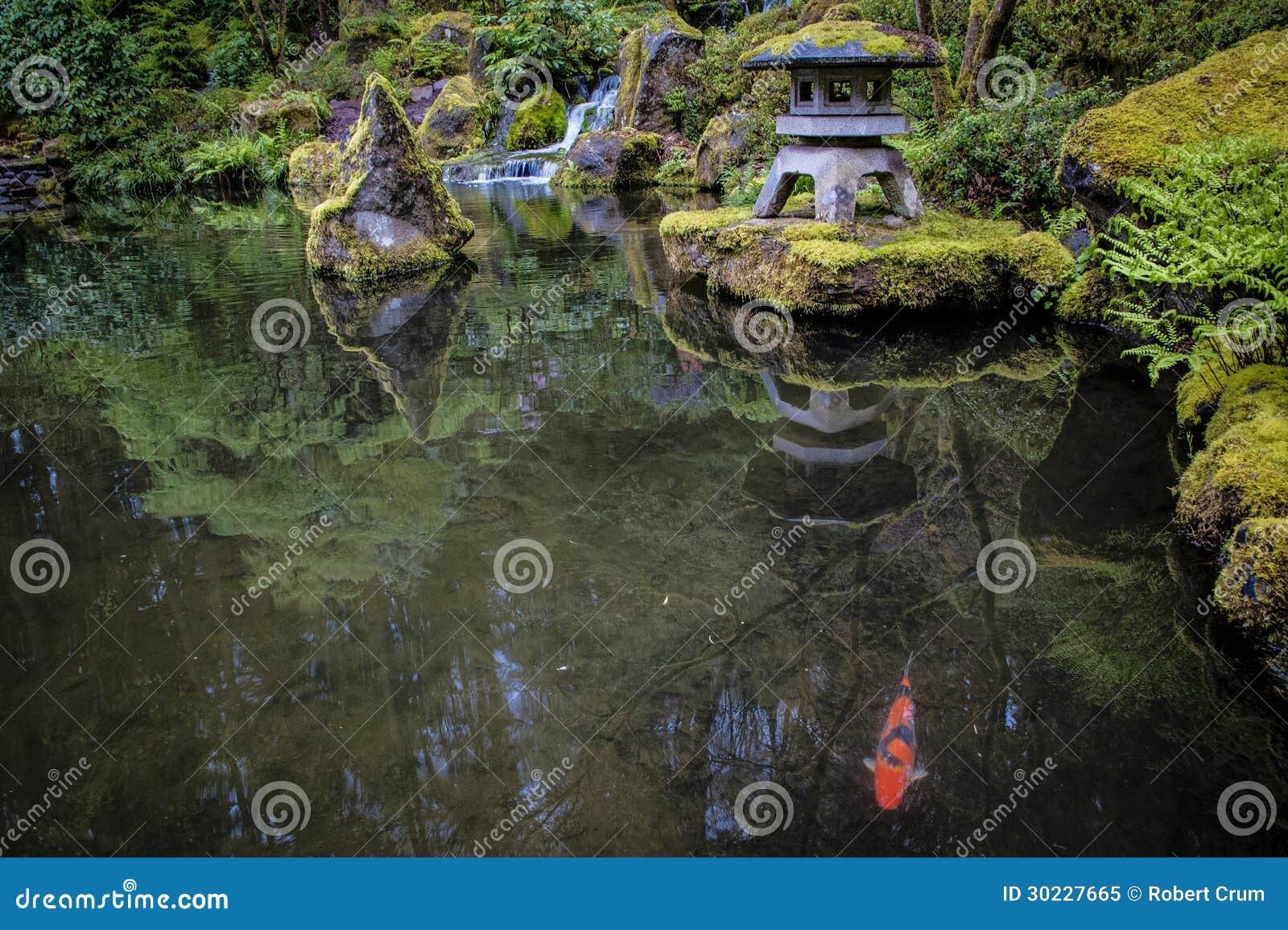Koi in uno stagno del giardino immagine stock immagine for Stagno da giardino