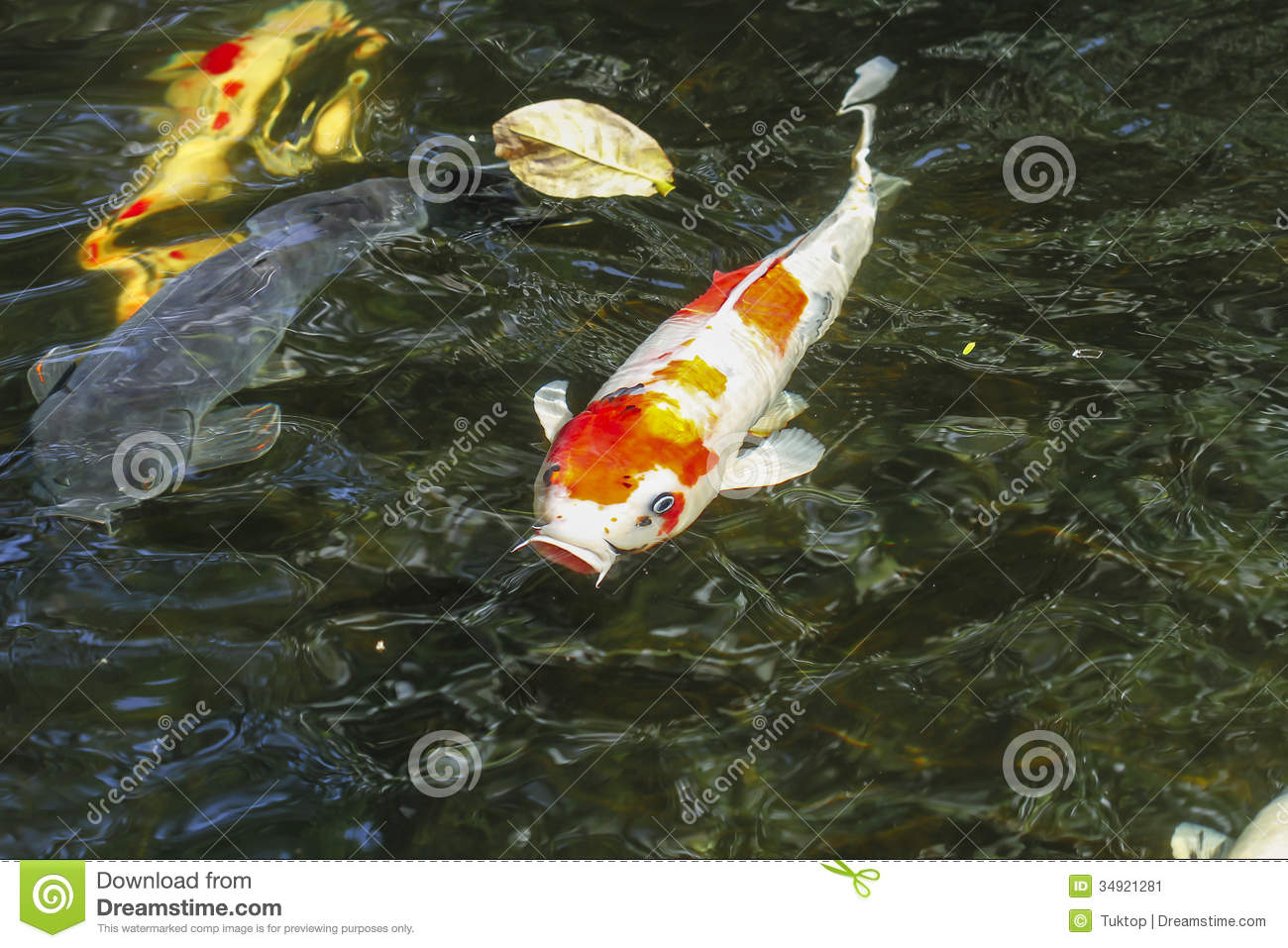 Koi pond design thailand joy studio design gallery for Koi fish pond design in malaysia