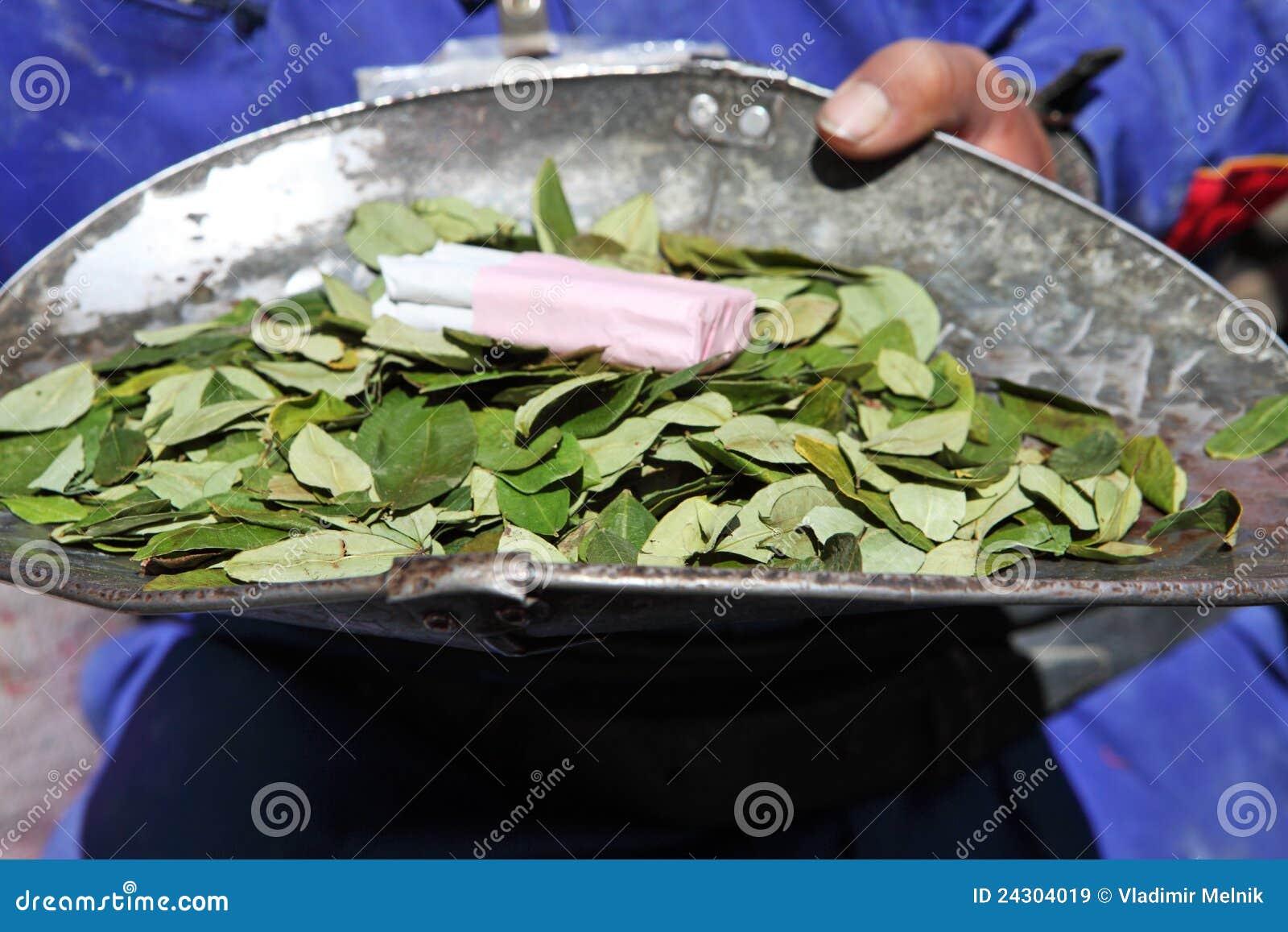 Koka liście dla sprzedaży