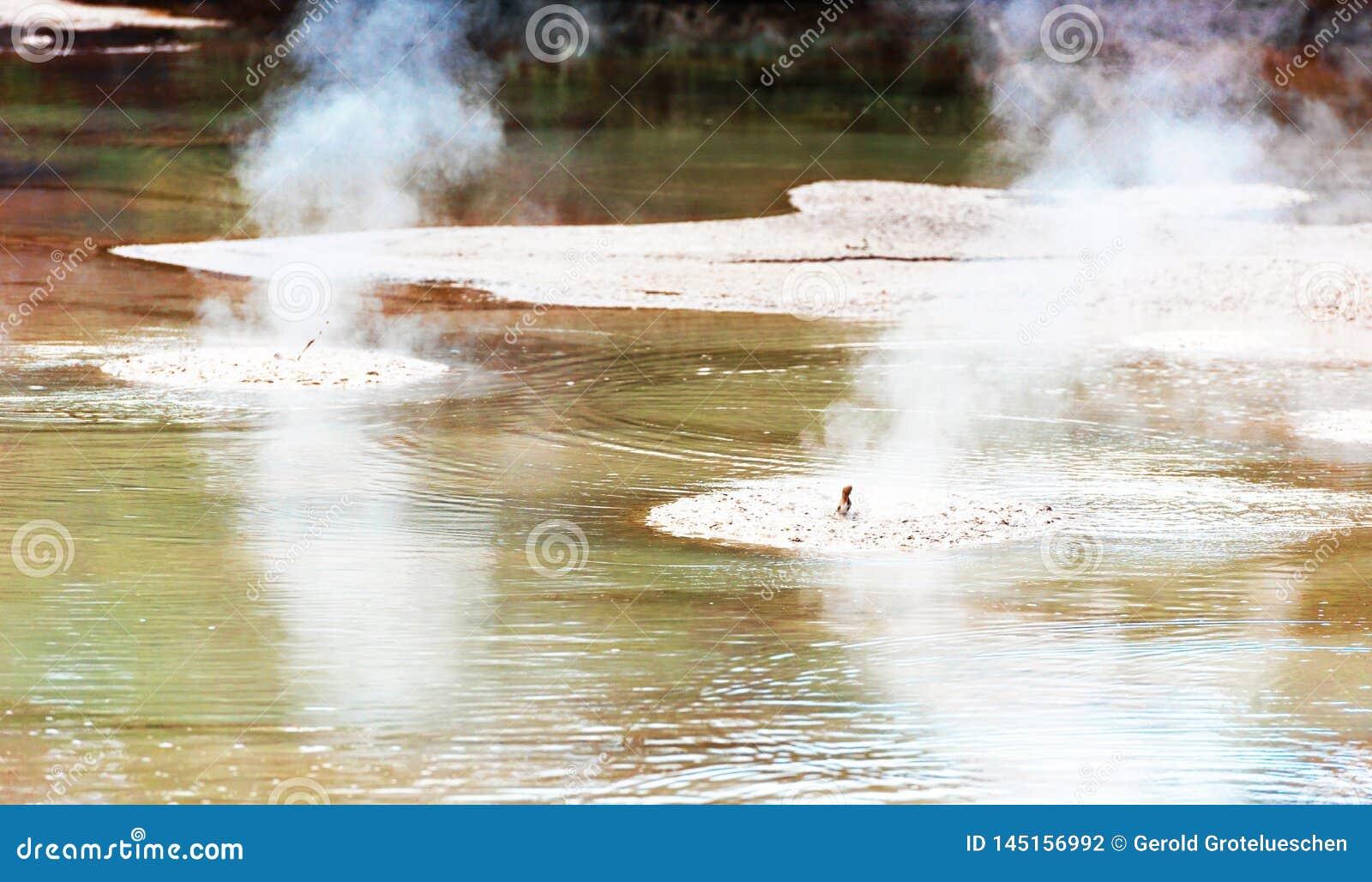 Kokande gyttjap?l i Wai-O-Tapu den geotermiska underland, Rotorua, Nya Zeeland