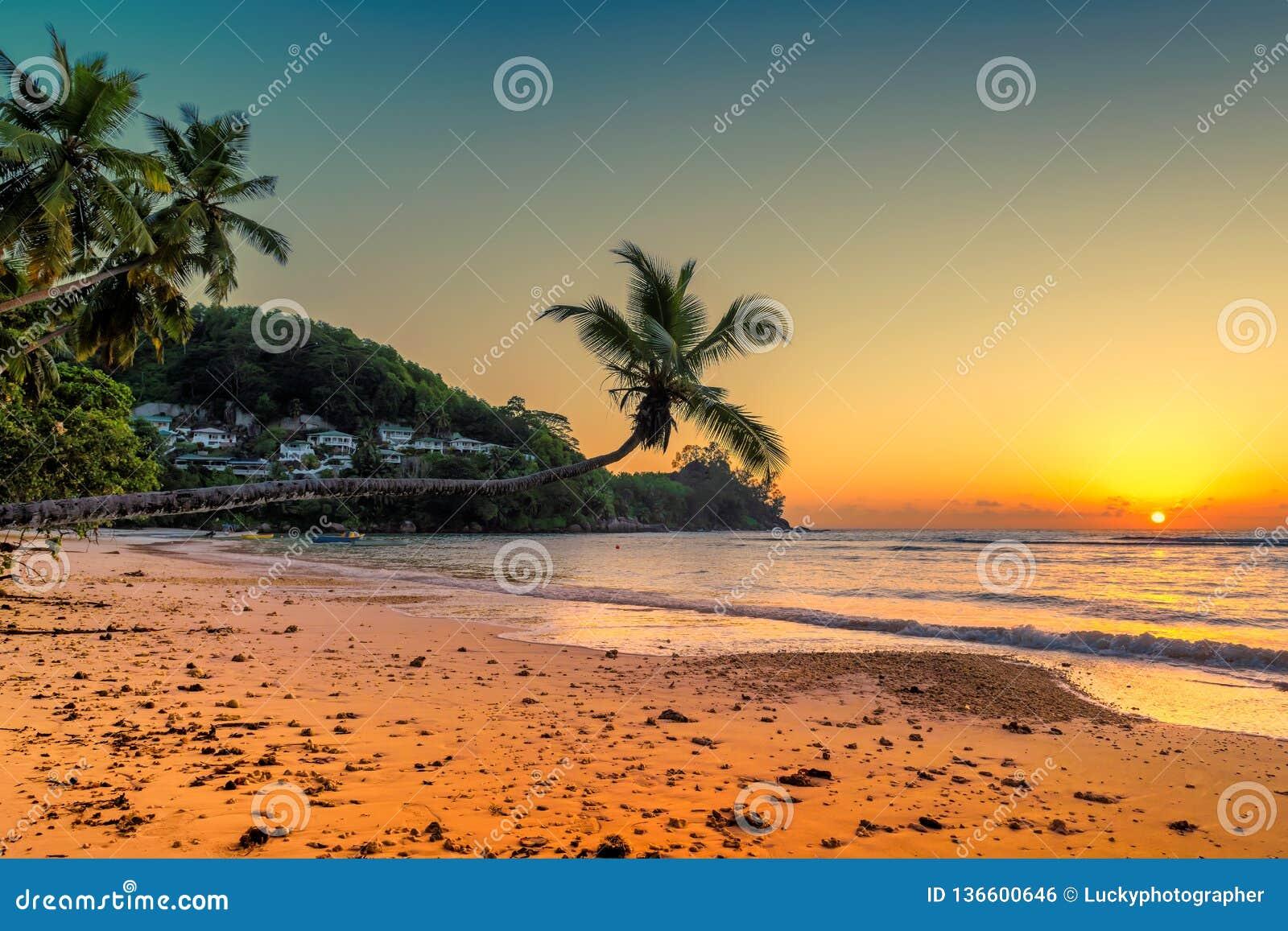 Kokosnöten gömma i handflatan på solnedgången över den tropiska stranden
