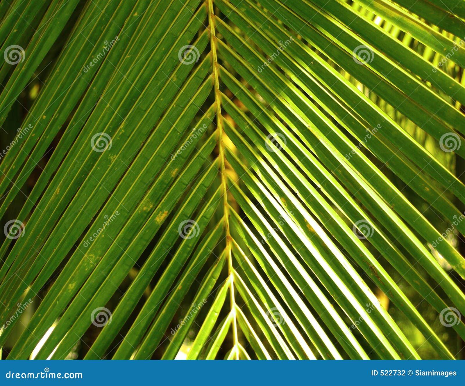 Kokosnötleaves