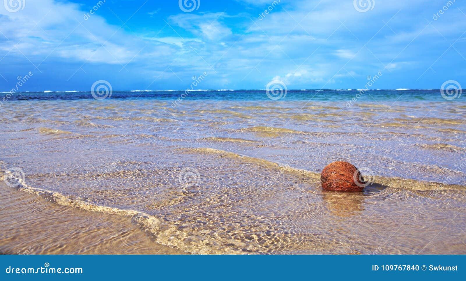 Kokosnoot op Caraïbisch strand