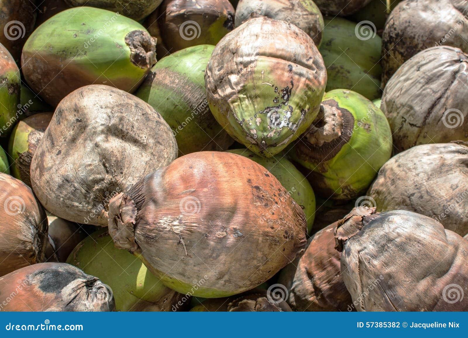 Kokosnotenachtergrond