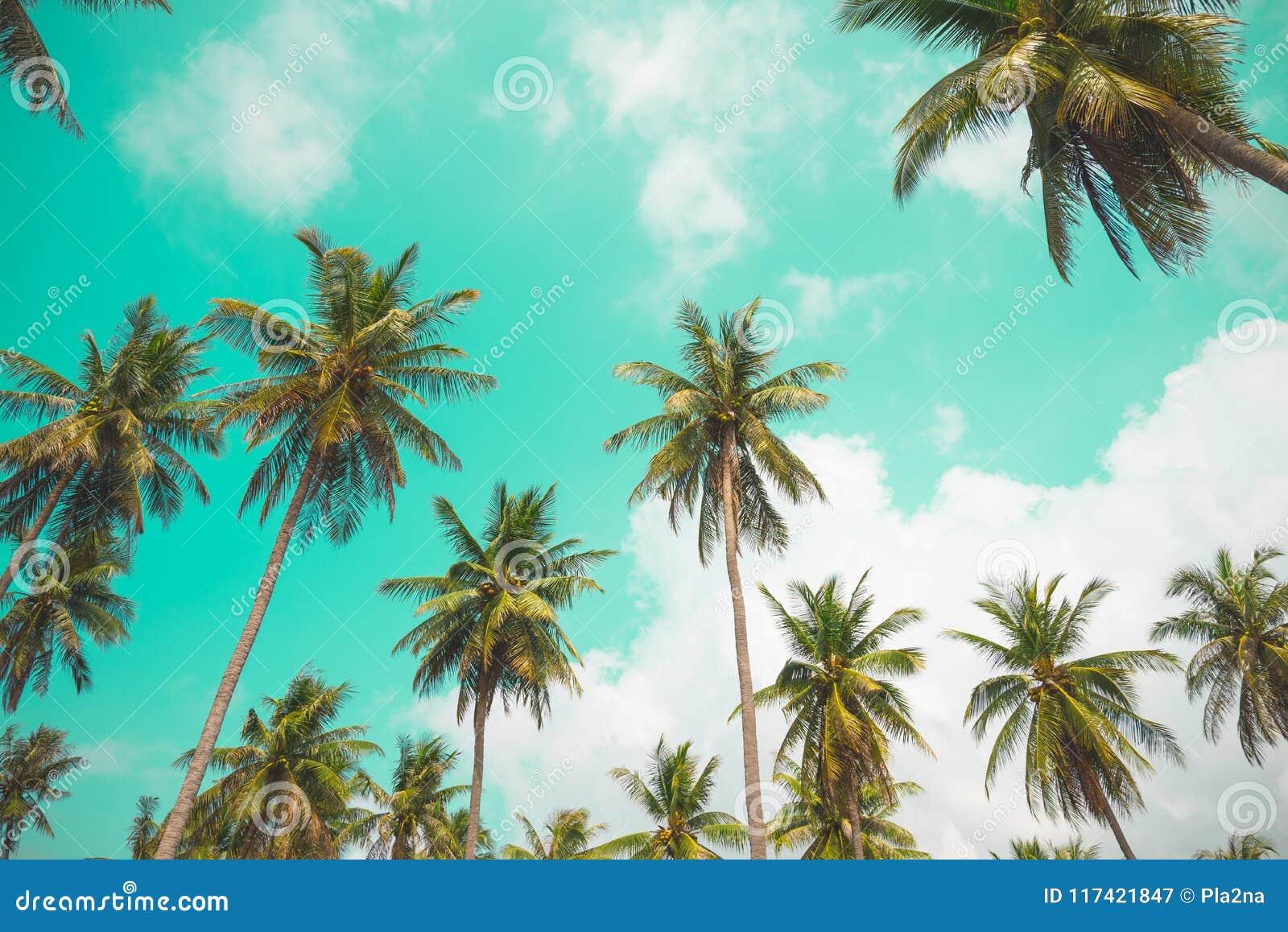 Kokosnotenpalmen - de Tropische vakantie van de de zomerwind, Uitstekende ton