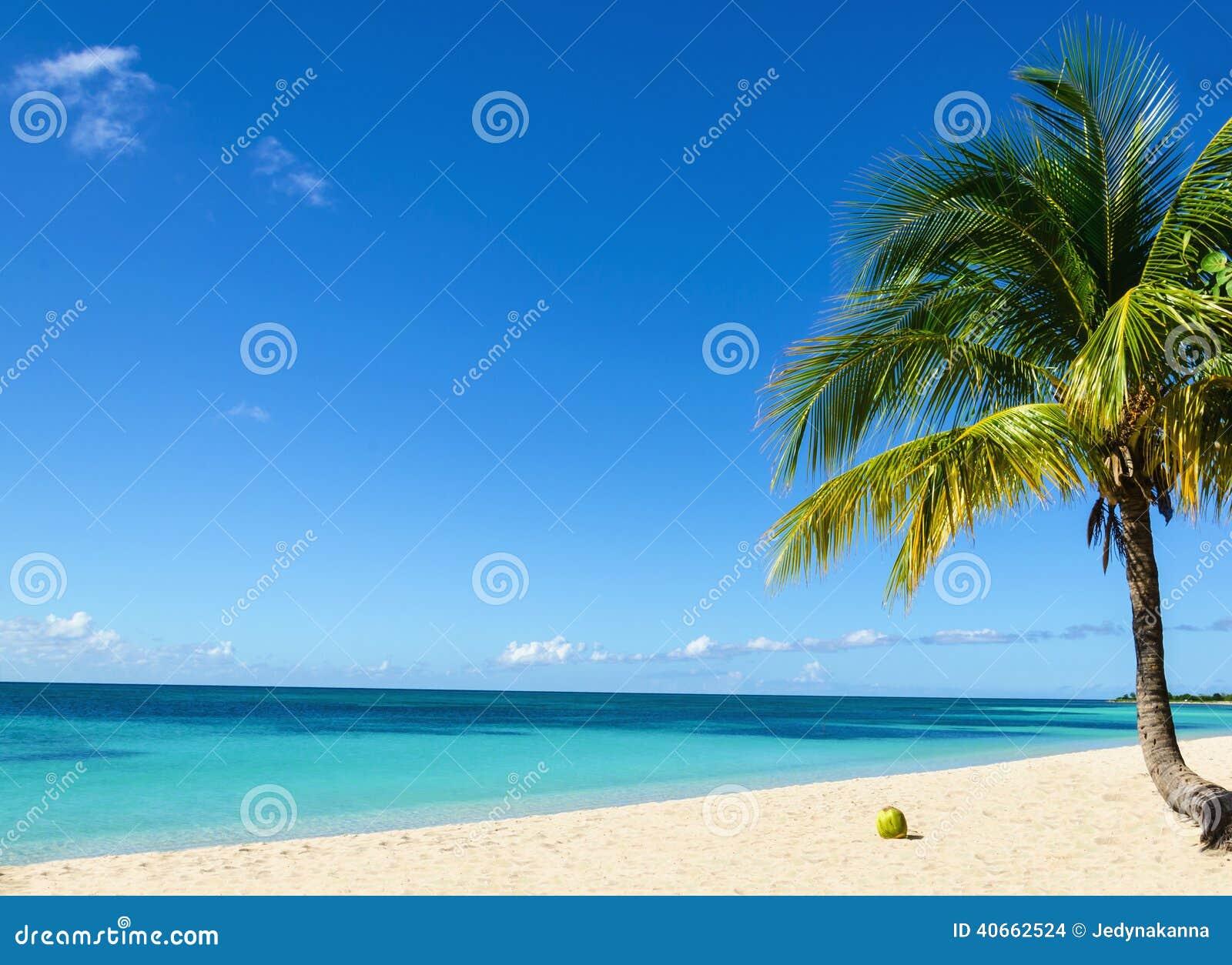 kokosnuss auf einem exotischen strand mit der palme die. Black Bedroom Furniture Sets. Home Design Ideas