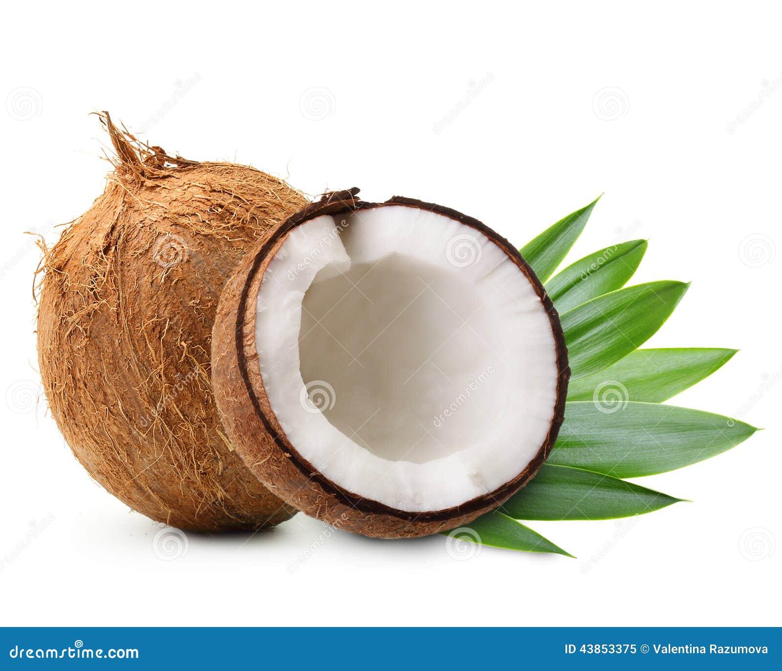 Kokosnuss mit Palmblättern