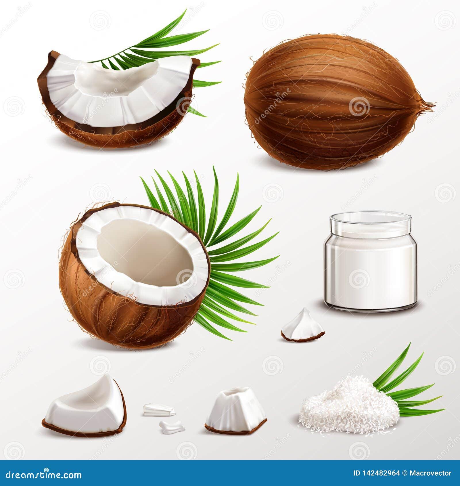 Kokosnuss-realistischer Satz