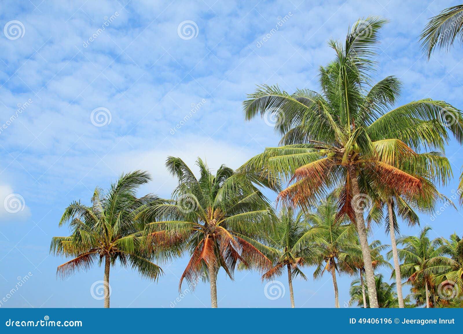 Download Kokosnussbäume stockfoto. Bild von outdoor, küste, blau - 49406196