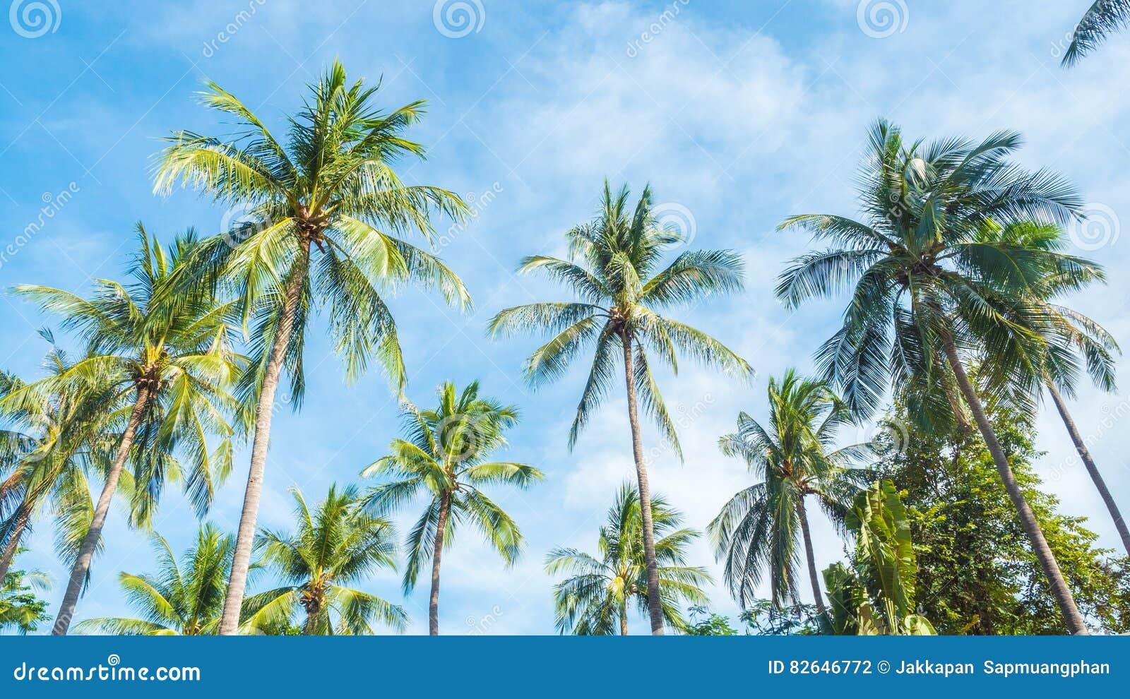 Kokosnussbaum und -sonne