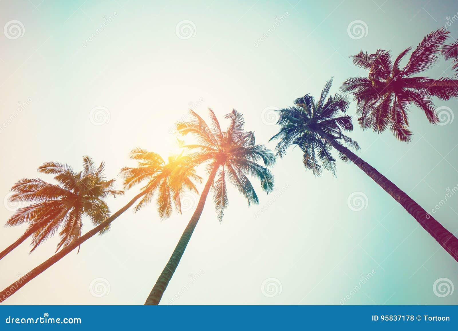 KokosnussPalme auf Strand und Sonnenlicht mit Weinlese tonte Effekt