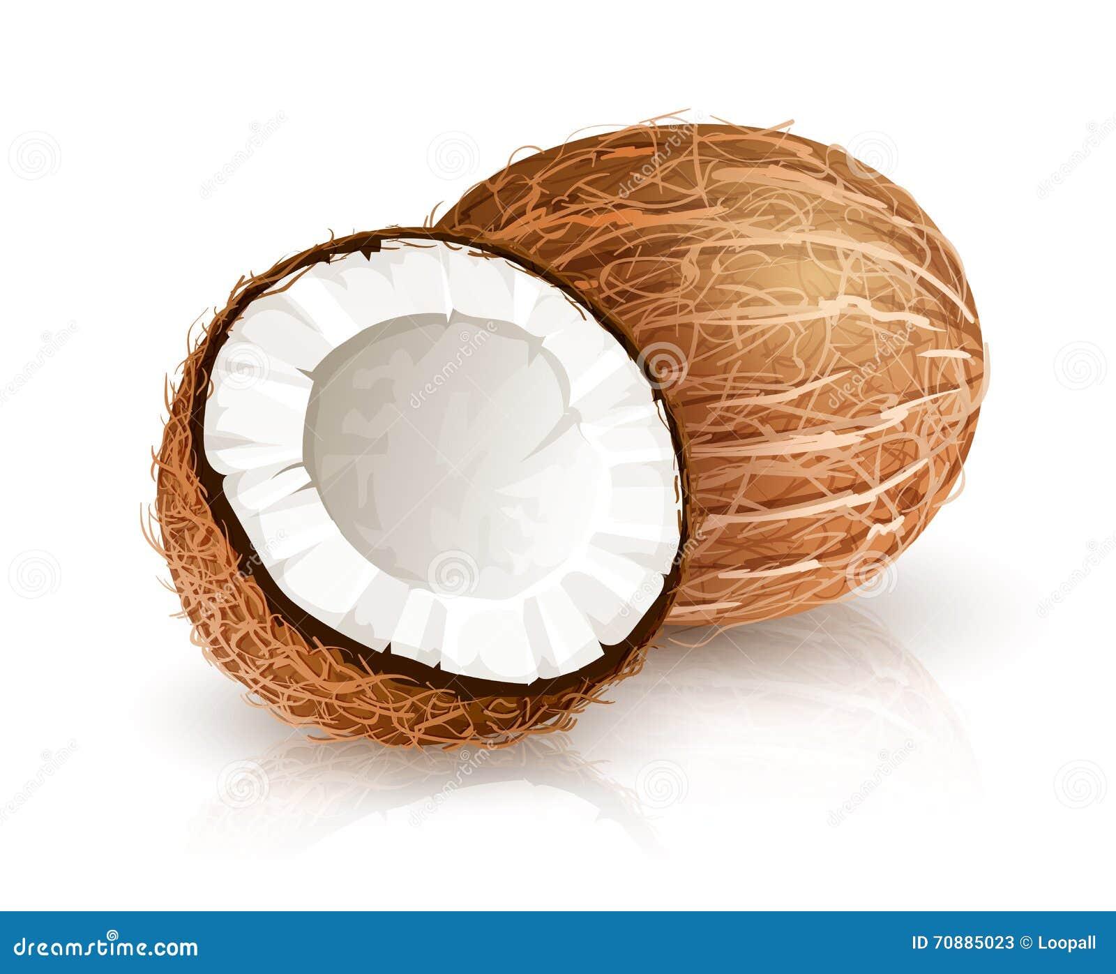 Kokosowa tropikalna dokrętki owoc z cięciem Eps10 wektorowy ilustracyjny biały tło