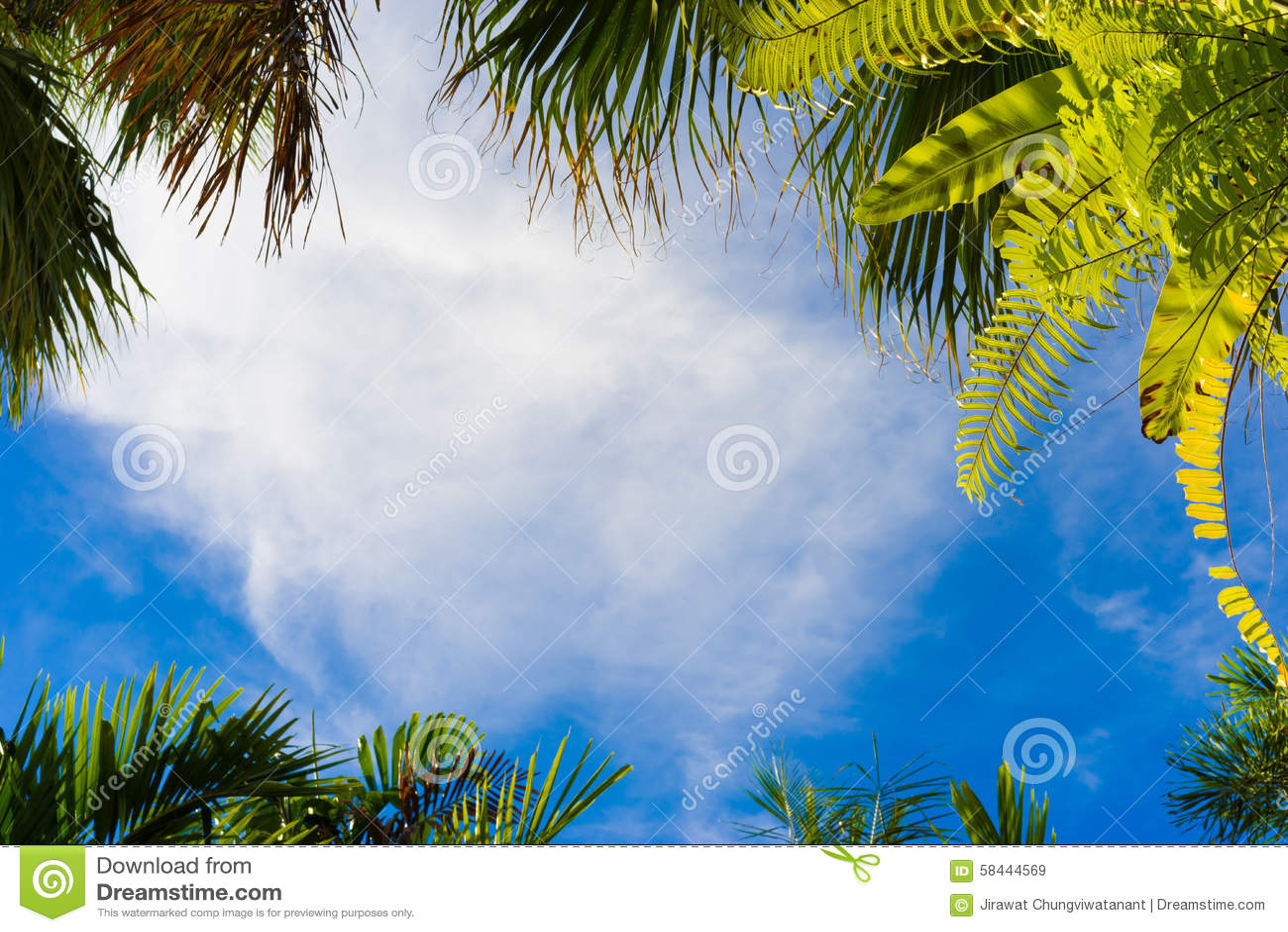 Kokosowego drzewa rama