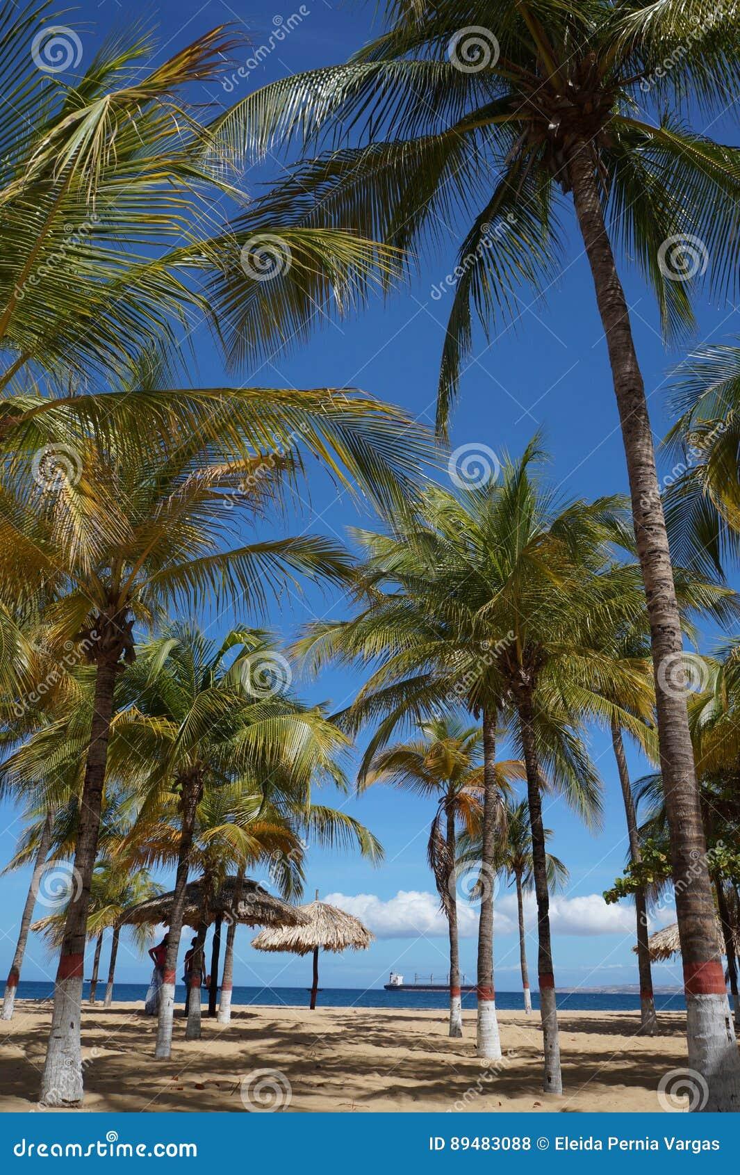 Kokosowi drzewa