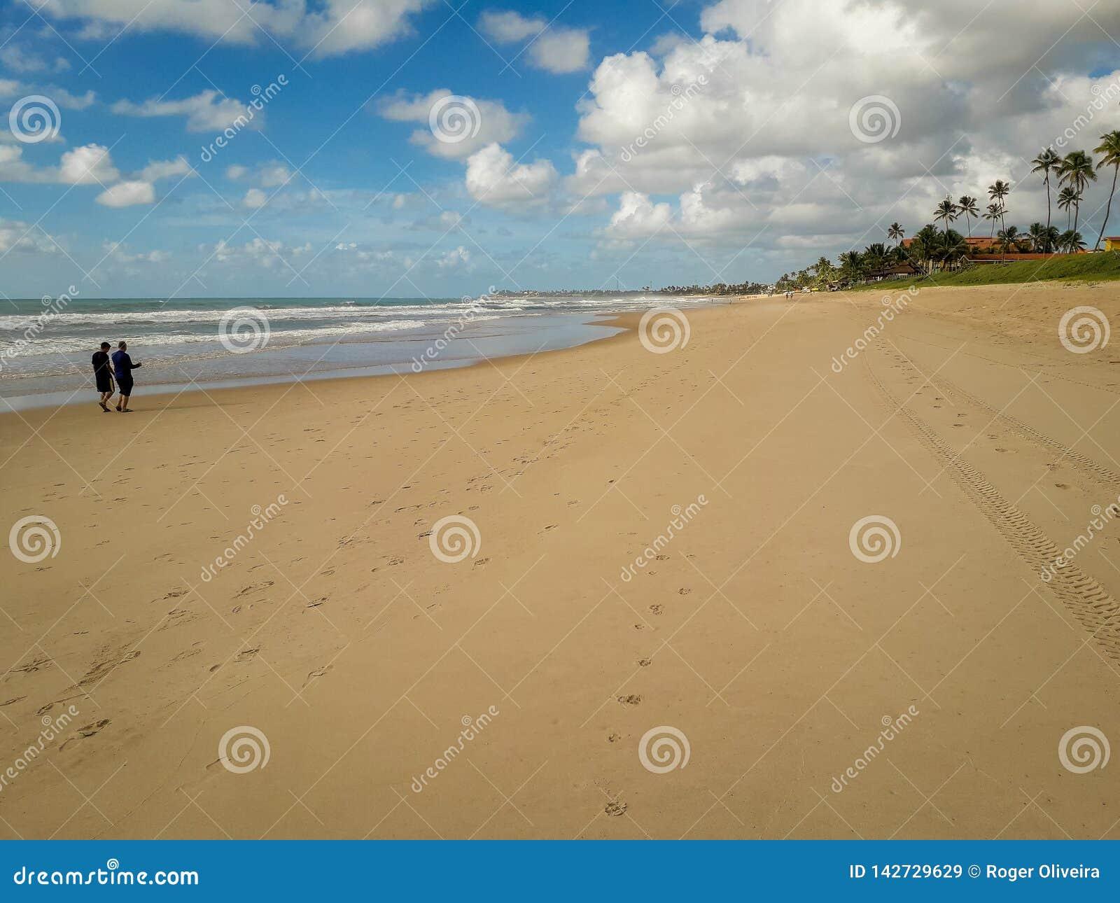 Kokosowi drzewka palmowe na białej piaskowatej plaży w Porto De Galinhas, Pernambuco, Brazylia