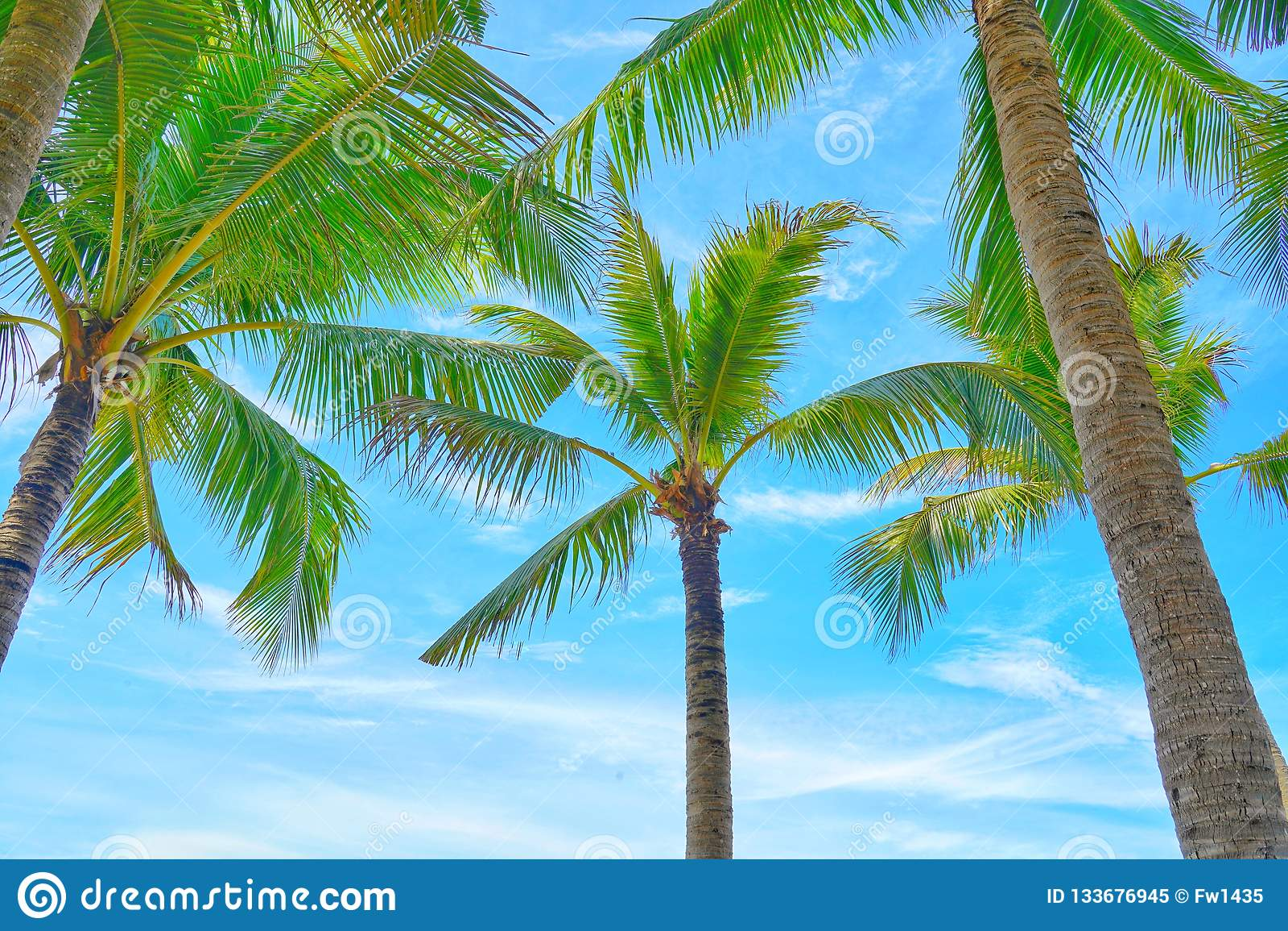 Kokosowi drzewka palmowe widok i niebieskie niebo na plaży