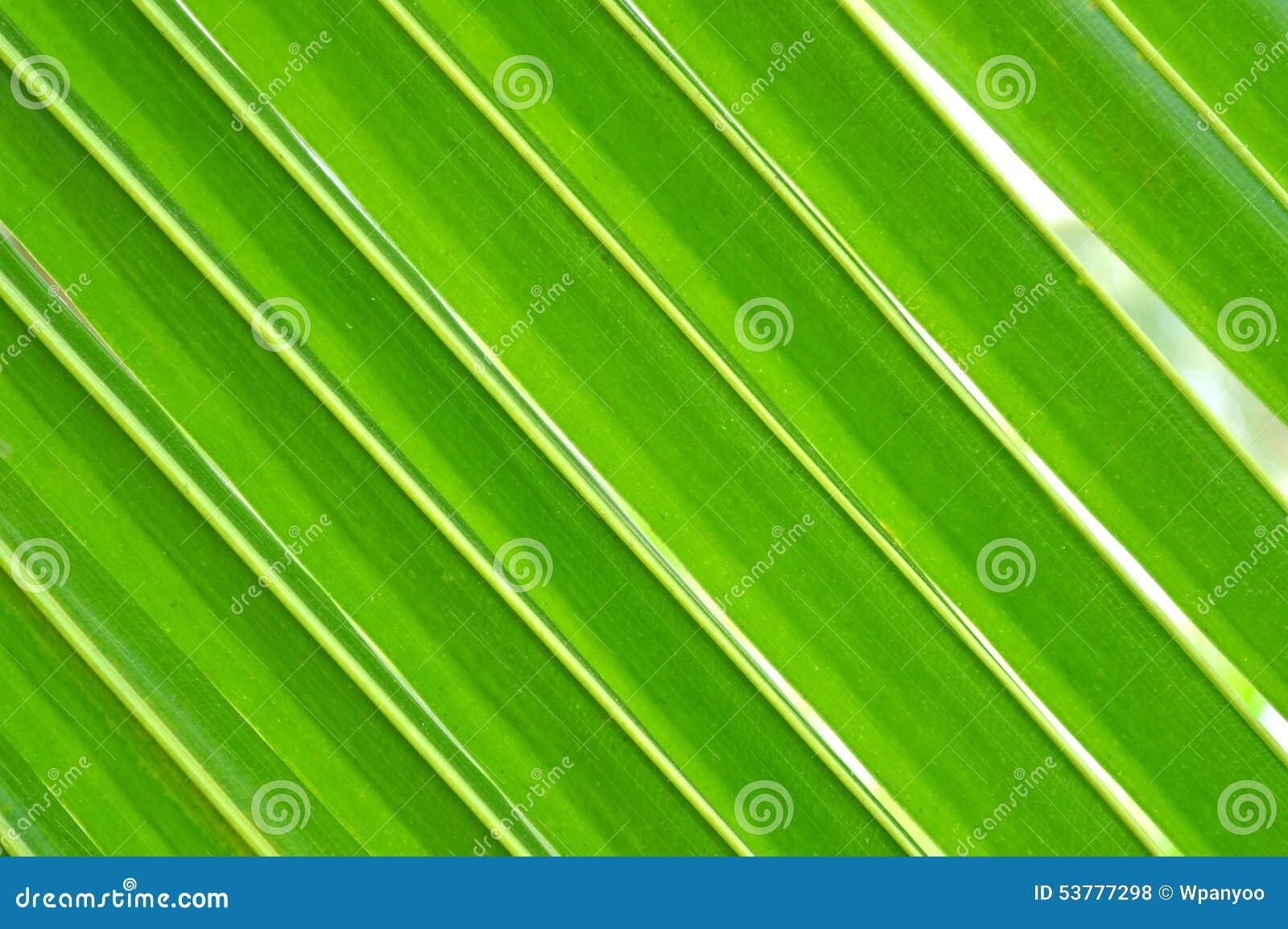 Kokosowi liście