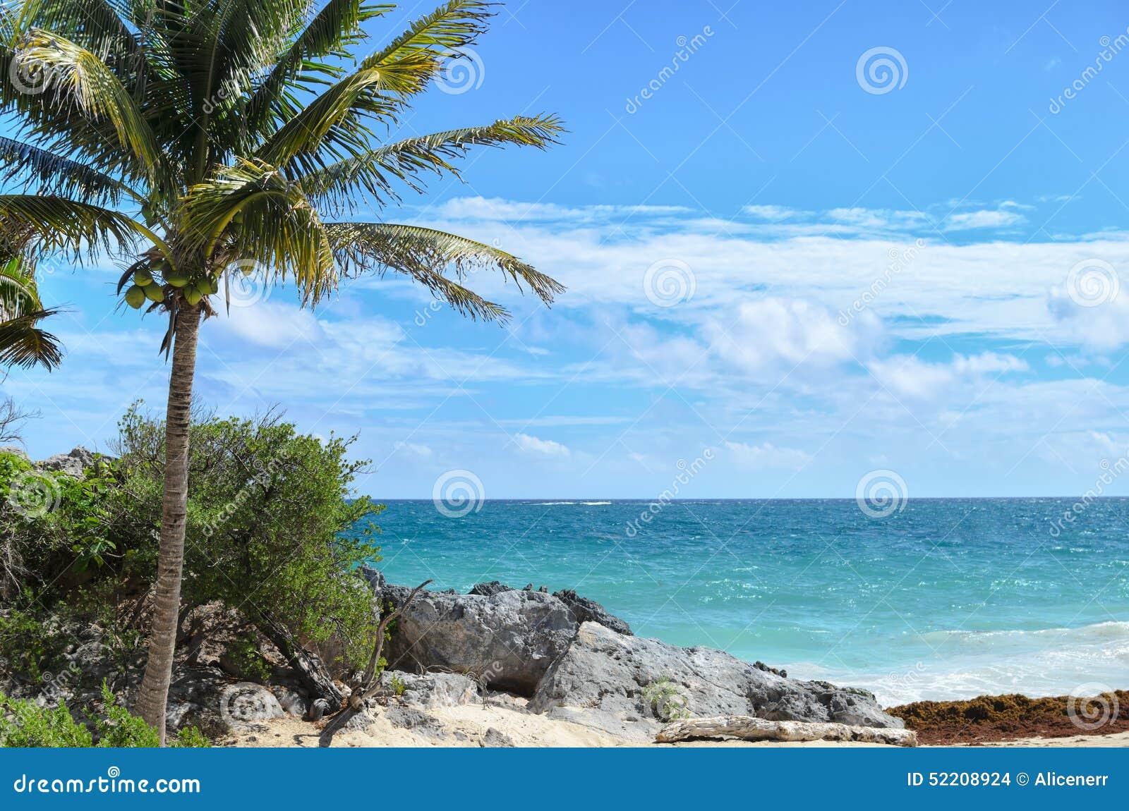 Kokosowy drzewko palmowe przy skalistą białą piasek plażą na wietrznym dniu
