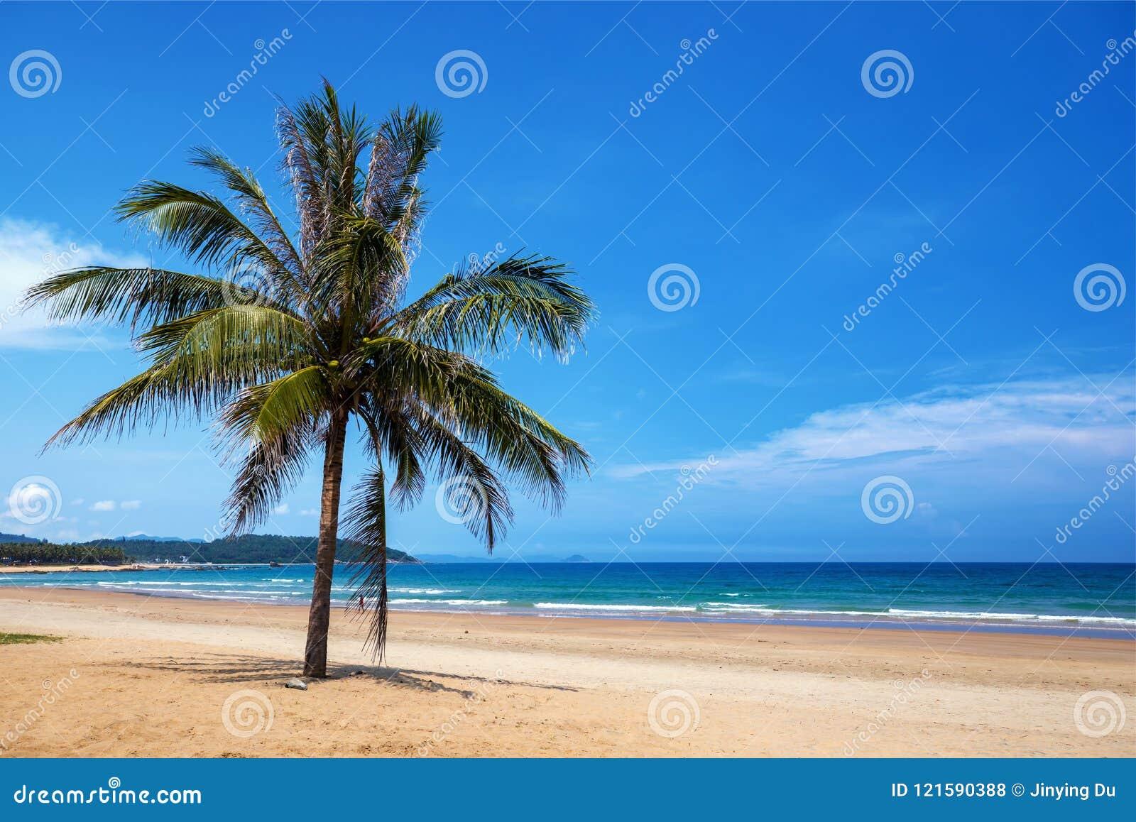 Kokosowy drzewo i morze