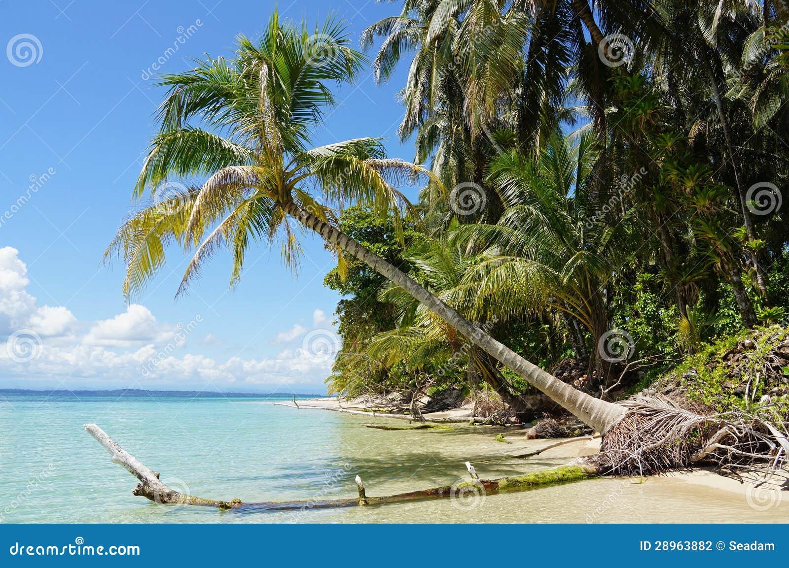 Kokosowy drzewo nad morzem