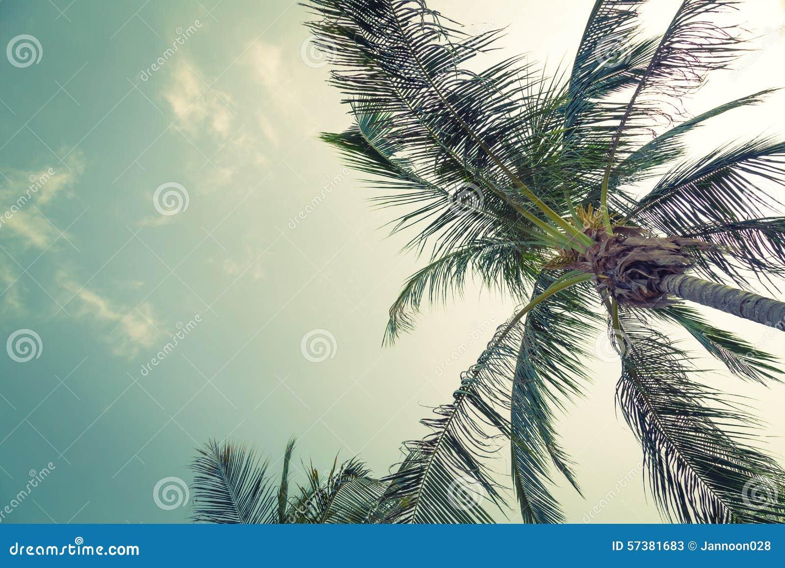 Kokospalm (Gefiltreerd beeld verwerkt uitstekend effect )