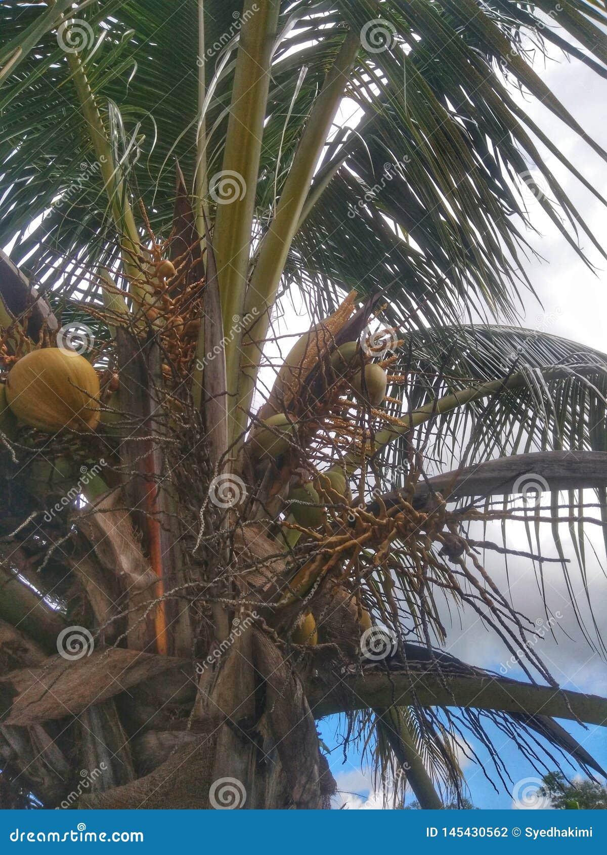 Kokospalm met een blad en een bewolkte achtergrond