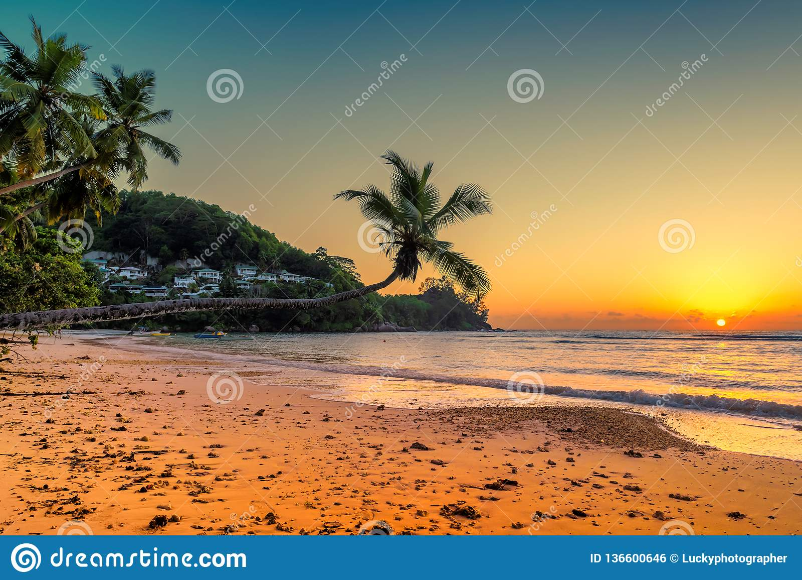Kokospalmen bij zonsondergang over tropisch strand