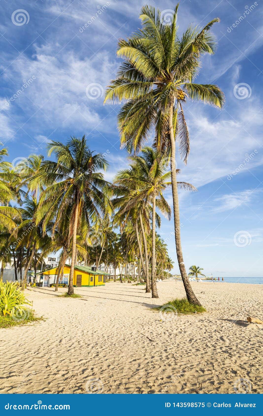 Kokospalmen in een Caraïbisch strand