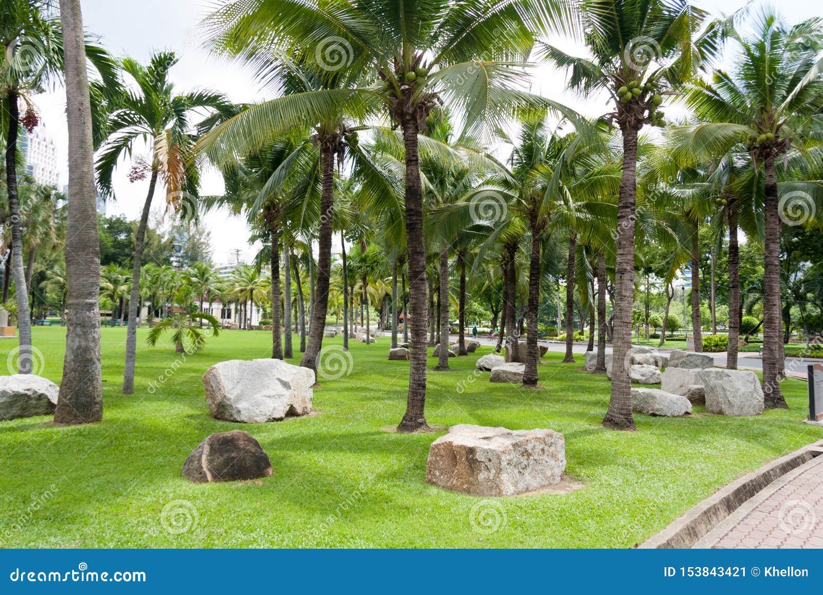 Kokospalmen en rotsenn Lumphini park, Bangkok, Thailand
