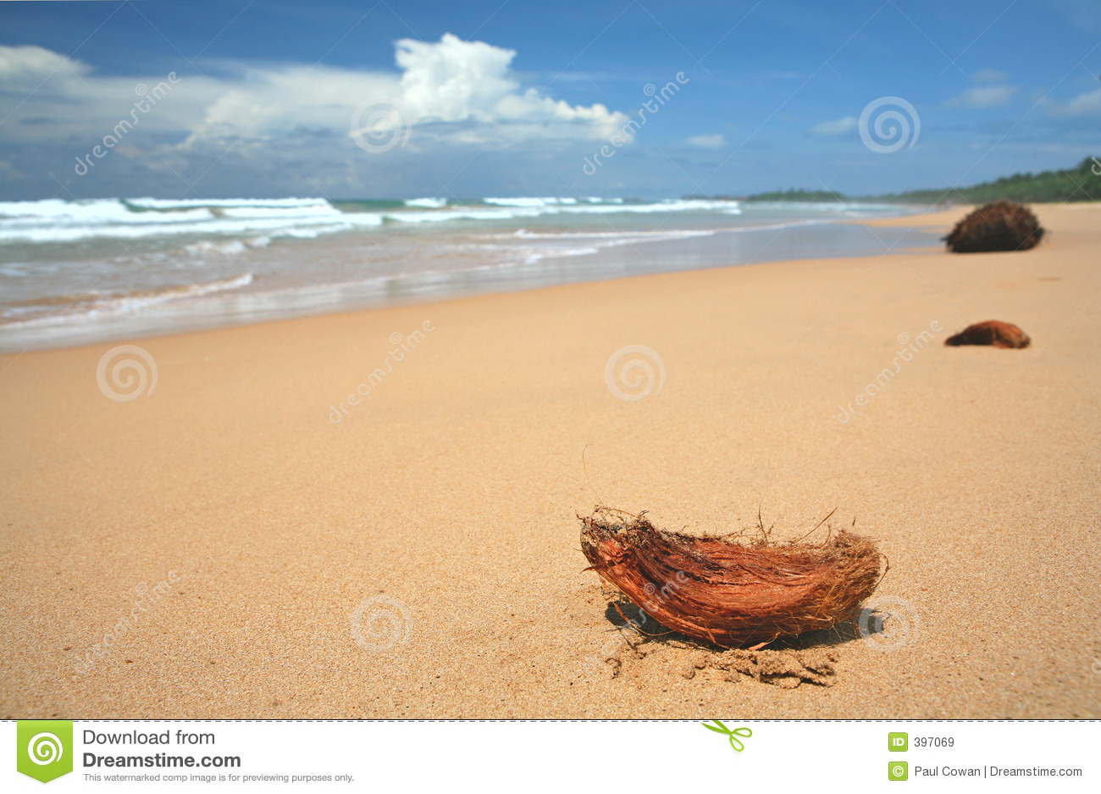 Kokosy na plaży