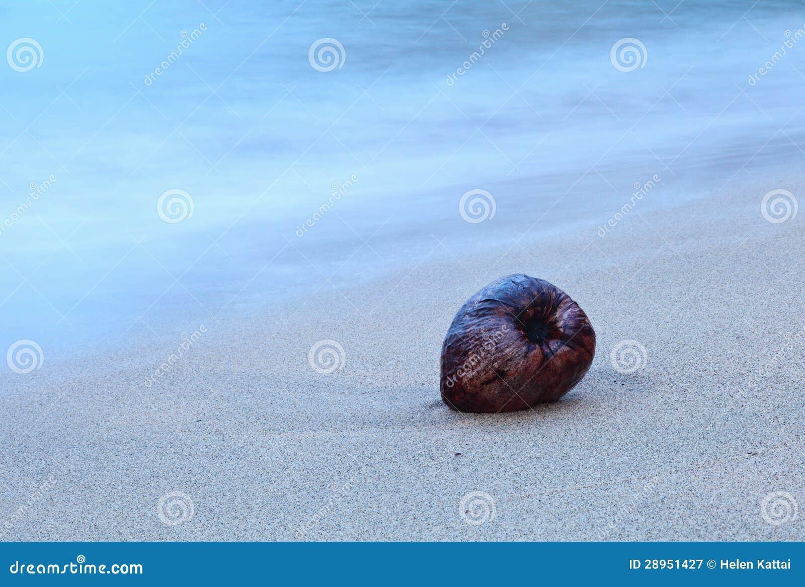 Koks na plaży