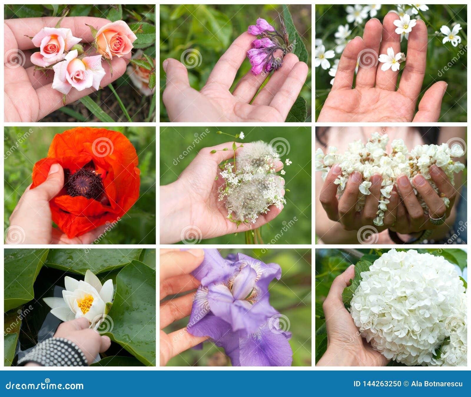 Kolaż barwiona wiosna kwitnie w ręce młoda dziewczyna na białym tle