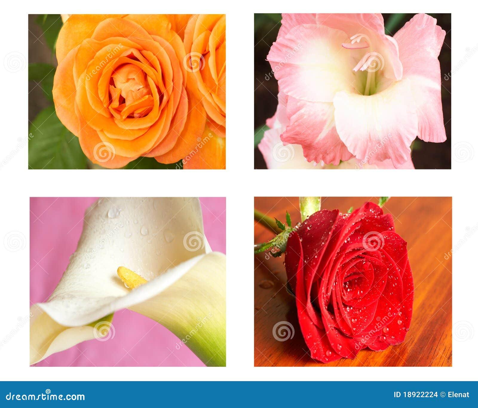 Kolaży kwiaty