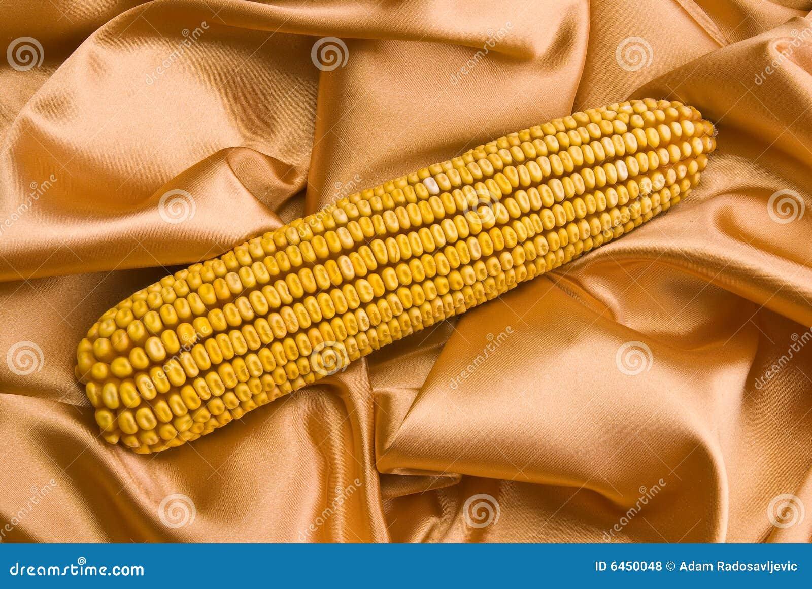 Kolby kukurydzy satin