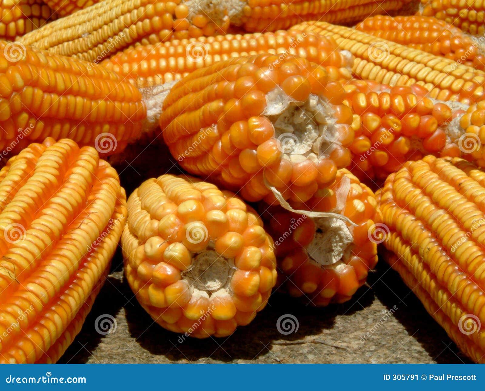 Kolby kukurydzy ziemi