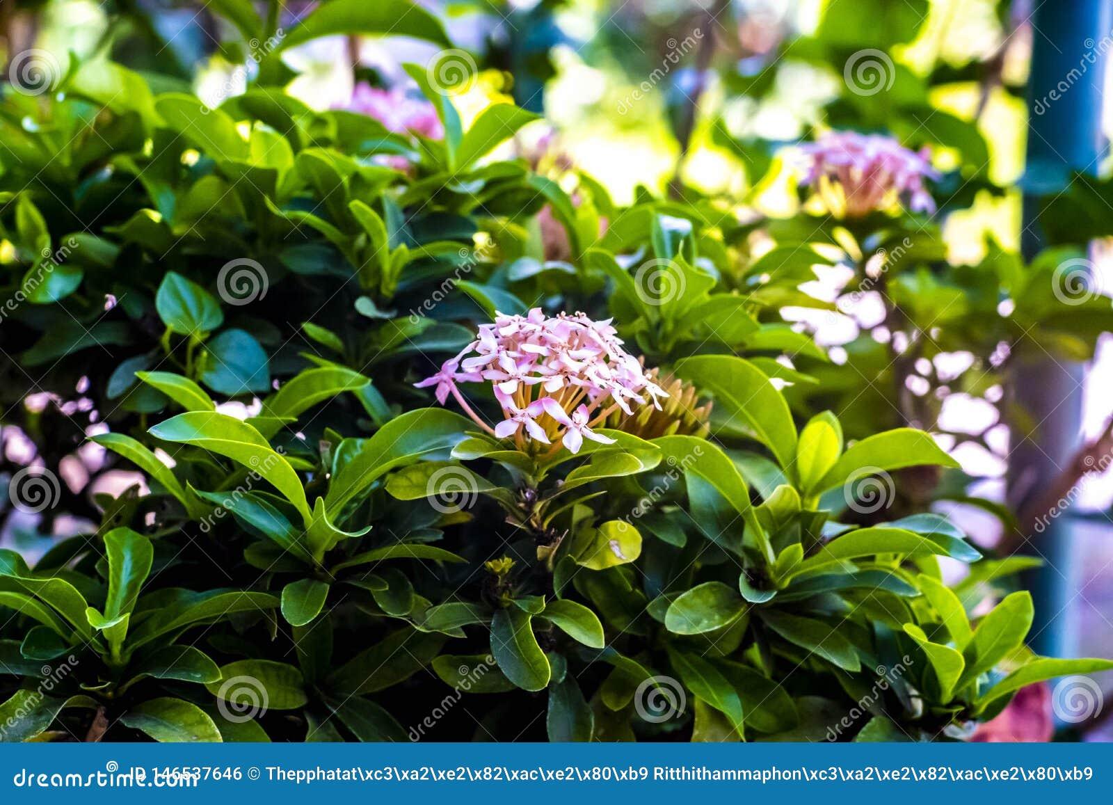 Kolca kwiatu ziele? w ten spos?b w ten spos?b w ten spos?b