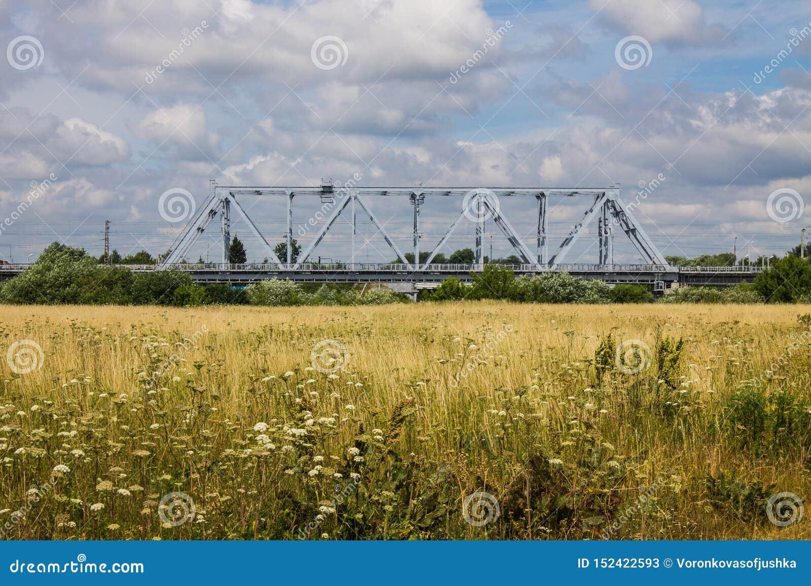 Kolejowy metalu most i lato łąka z wysoką trawą
