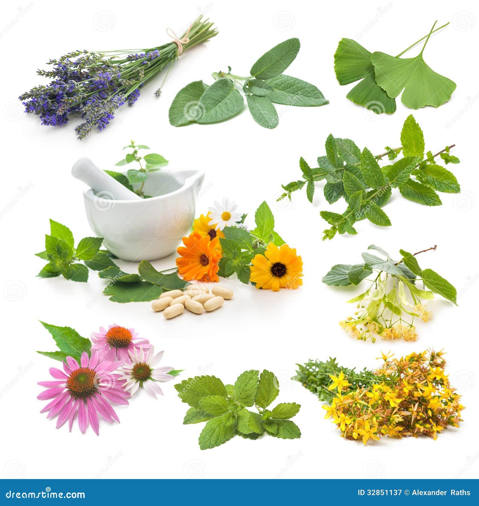 Kolekcja świeży leczniczy ziele