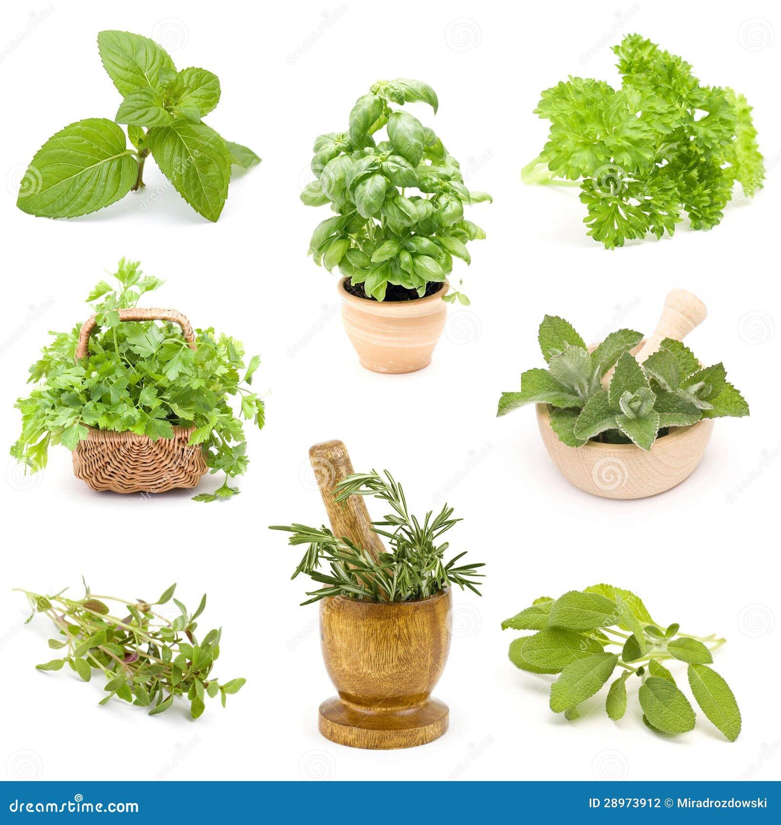 Kolekcja świezi ziele