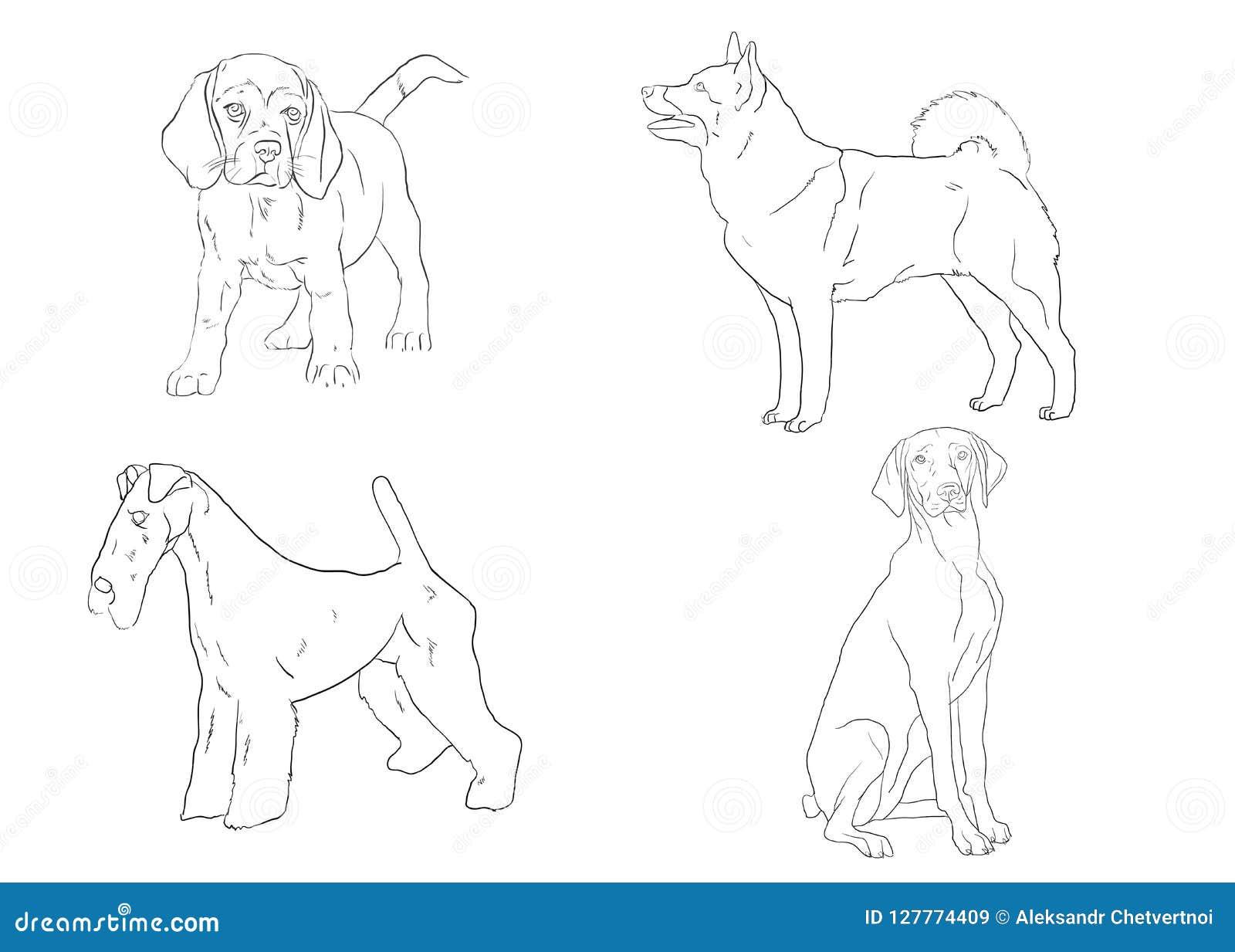 Kolekcja nakreślenie trakenu psy Odosobneni ręka rysunki również zwrócić corel ilustracji wektora