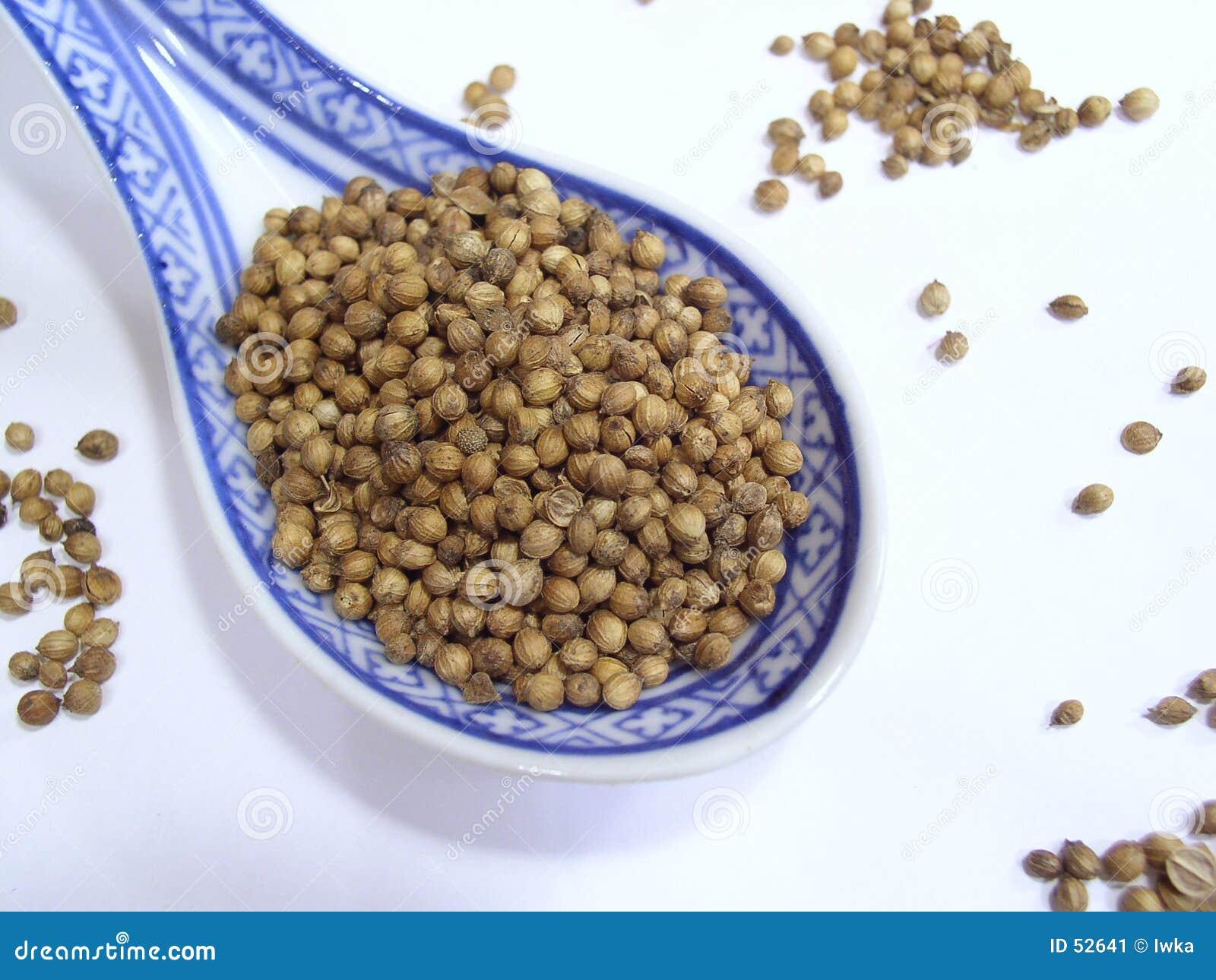 Kolendrowi nasion
