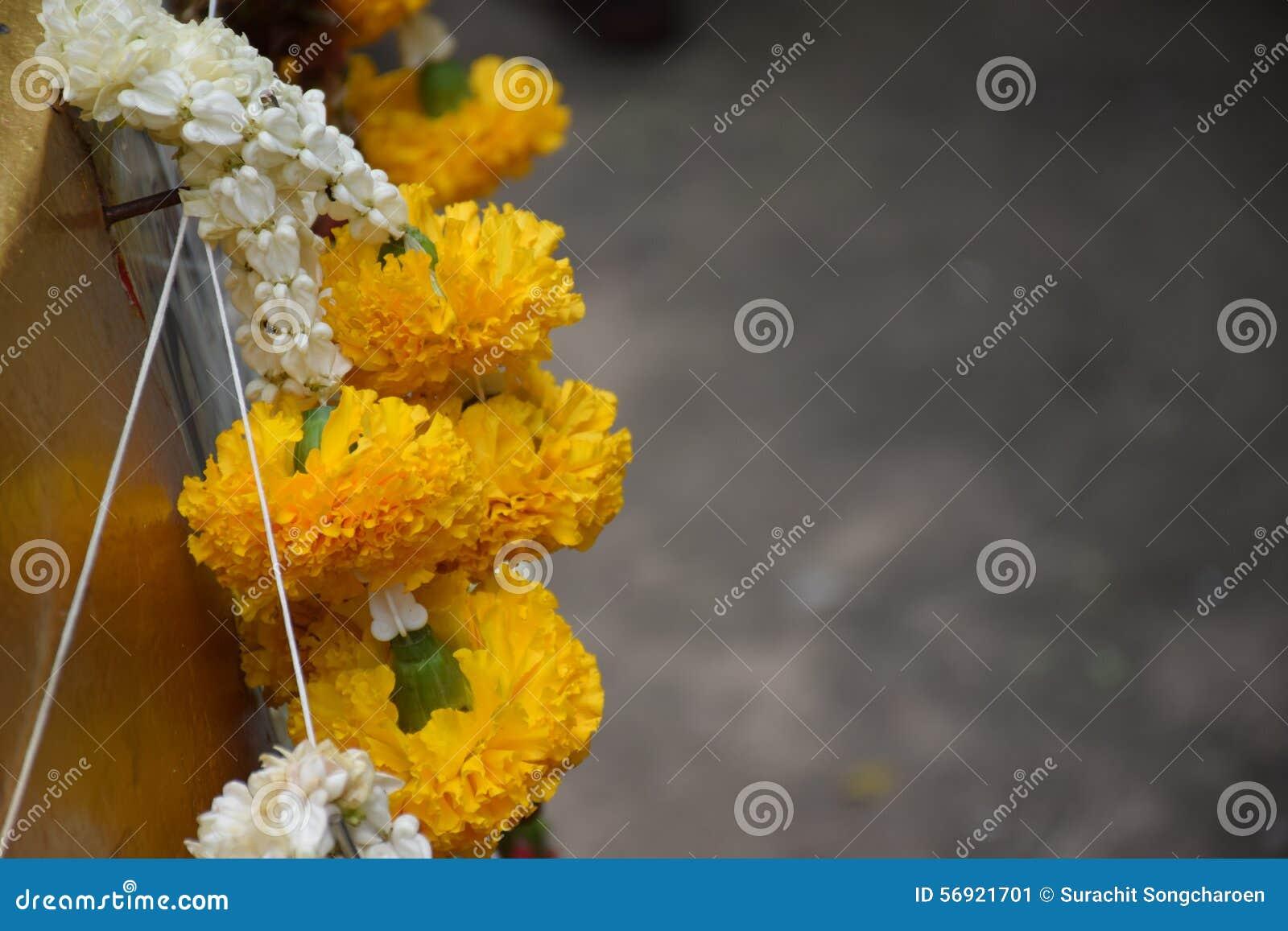 Kolia kwiaty i popielaty tło