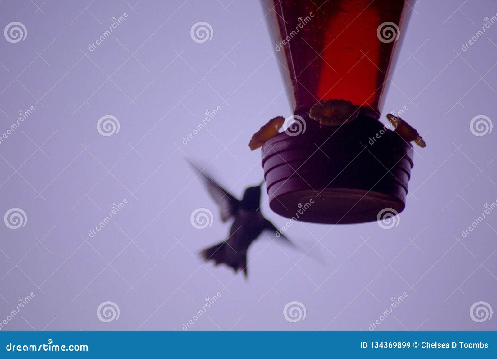 Kolibrieslokjes van Voeder
