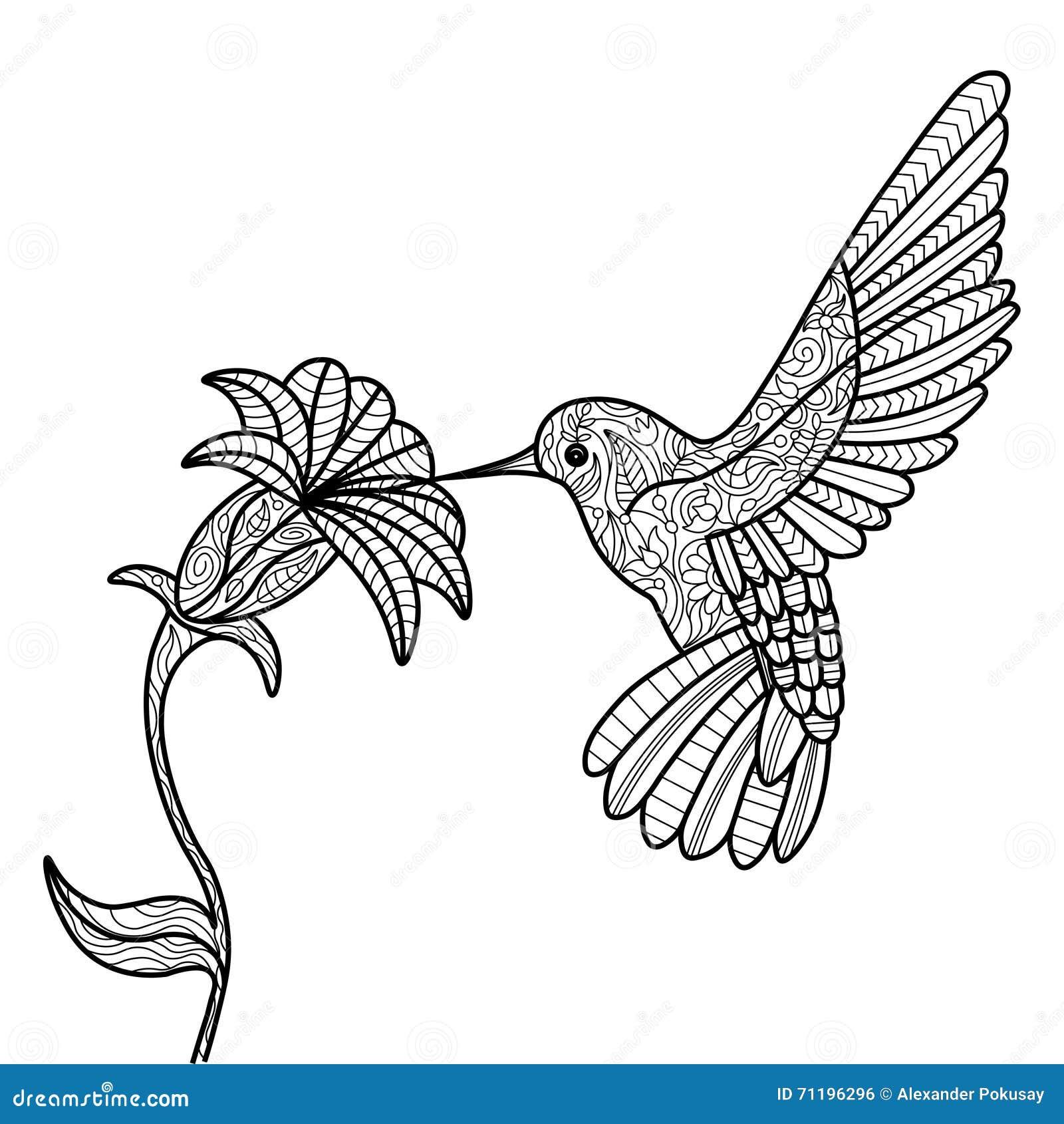 kolibrimalbuch für erwachsenvektor vektor abbildung