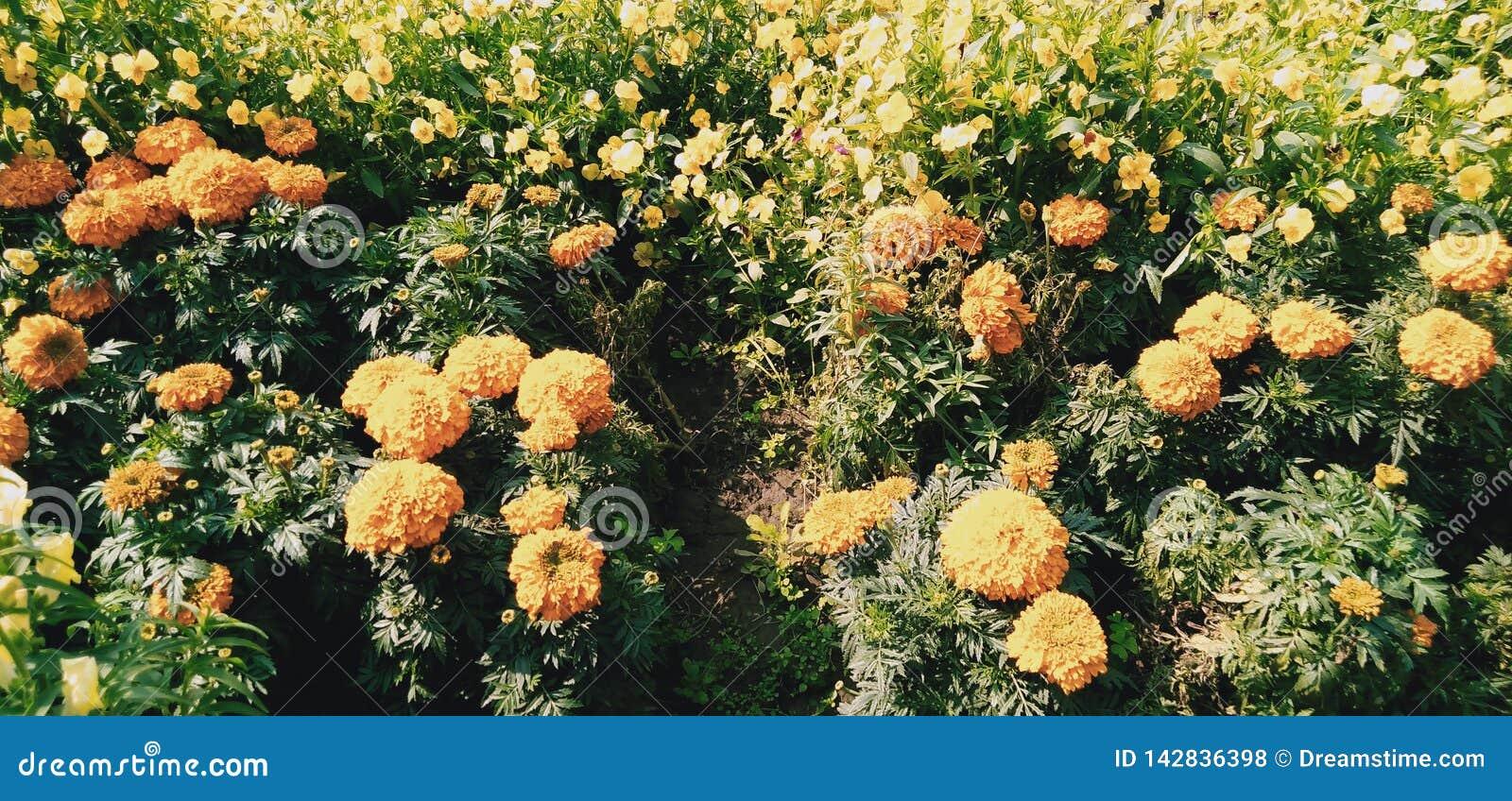 Kolonie van bloemen
