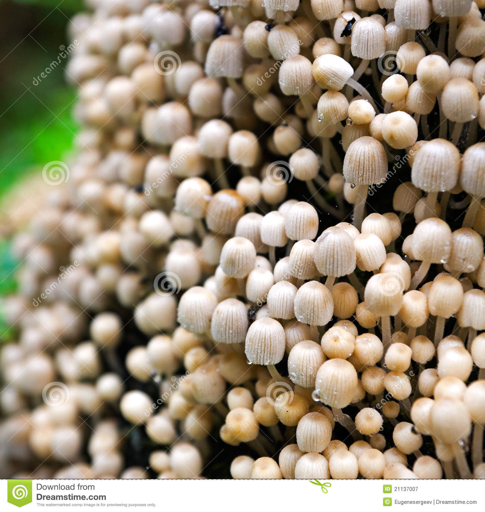 Kolonin plocka svamp talrikt